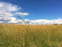 Alta erba nel campo Fotografie Stock