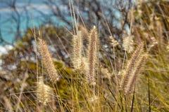 Alta erba selvatica alla cima della montagna Fotografia Stock