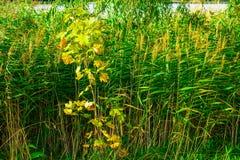 Alta erba variopinta in autunno Fotografia Stock