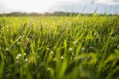 Alta erba verde Immagini Stock Libere da Diritti