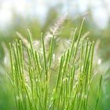 Alta erba verde della molla Fotografia Stock Libera da Diritti