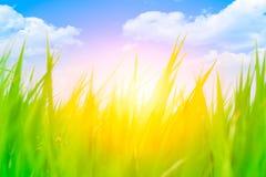 Alta erba verde della sfuocatura variopinta con cielo blu Fotografie Stock