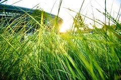 Alta erba verde densa Fotografie Stock