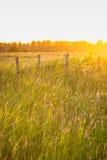 Alta erba verde durante la sera di estate Fotografia Stock Libera da Diritti