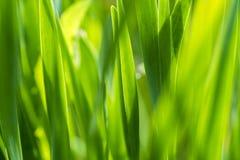 Alta erba, verde positivo Fotografie Stock