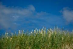 Alta erba verde sul fondo del cielo Immagini Stock
