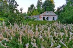 Alta erba verde vicino di melo con la frutta fresca sui precedenti di vecchia casa con mattoni a vista distrutta Fotografie Stock Libere da Diritti