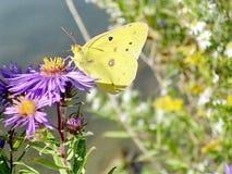 Alta farfalla 2004 del parco di Toronto Fotografia Stock