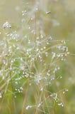 Alta fioritura dell'erba Fotografia Stock