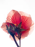 Alta flor dominante Foto de archivo libre de regalías