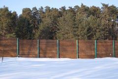 Alta foresta del pino dopo il limite marrone in inverno Immagini Stock