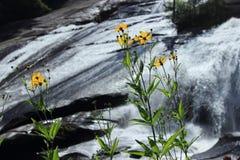 Alta foresta dello stato di Du Pont di cadute Fotografie Stock Libere da Diritti