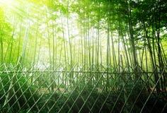 Alta foresta di bambù Fotografie Stock