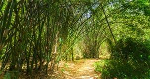 Alta foresta di bambù Immagini Stock Libere da Diritti