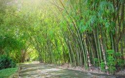 Alta foresta di bambù Immagini Stock