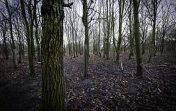 Alta foresta di definizione Immagini Stock Libere da Diritti
