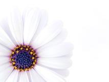 Alta foto chiave di un fiore Fotografia Stock Libera da Diritti
