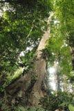 Alta giungla Henri Pittier National Park Venezuela della foresta pluviale nuvolosa ma Fotografia Stock