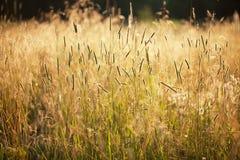 Alta hierba fotografía de archivo