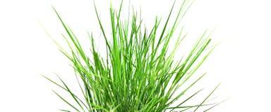 Alta hierba Imágenes de archivo libres de regalías