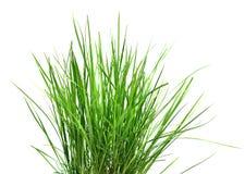 Alta hierba Imagen de archivo