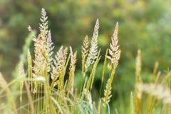 Alta hierba de la primavera Fotos de archivo