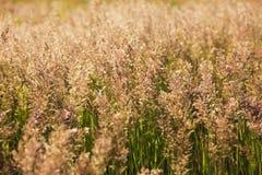 Alta hierba verde en el campo en día de verano caliente imágenes de archivo libres de regalías