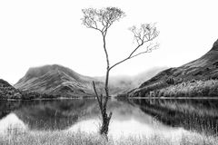 Alta immagine chiave in bianco e nero notevole del paesaggio del burro del lago Immagini Stock Libere da Diritti