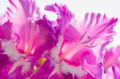 Alta immagine chiave del fiore per fondo Immagini Stock Libere da Diritti