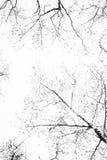 Alta immagine chiave della betulla autunnale Immagini Stock