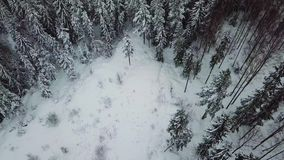 Alta inclinazione della macchina fotografica di volo su sopra il grande legno nell'inverno freddo stock footage