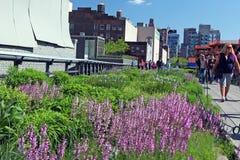 Alta linea parco in fioritura Fotografia Stock