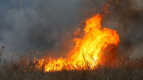 Alta llama enorme de un fuego de la tormenta que quema la hierba seca y arbustos en la estepa del bosque Fuego ardiendo en la nat almacen de video
