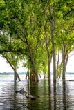 Alta marea al lago Lowell Idaho ed alla riflessione sommersa degli alberi Fotografia Stock Libera da Diritti