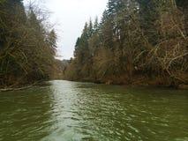 Alta marea del fiume di Siuslaw Immagini Stock