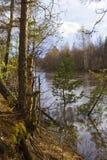 Alta marea del paesaggio del fondo in una foresta della molla su un fiume della foresta Fotografie Stock