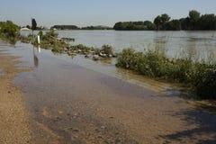 Alta marea del Reno in Speyer nel 2013 Fotografie Stock Libere da Diritti