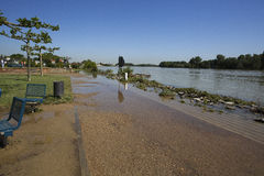 Alta marea del Reno in Speyer nel 2013 Fotografia Stock Libera da Diritti