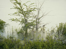 Alta marea di fonte Fotografia Stock Libera da Diritti