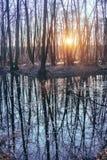 Alta marea di fonte nel tramonto della foresta Immagine Stock Libera da Diritti