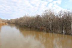 Alta marea di fonte rovesciando il fiume in primavera nella foresta dell'inondazione della foresta in primavera Fotografia Stock