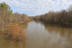 Alta marea di fonte rovesciando il fiume in primavera nella foresta dell'inondazione della foresta in primavera Fotografia Stock Libera da Diritti
