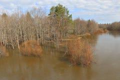 Alta marea di fonte rovesciando il fiume in primavera nella foresta dell'inondazione della foresta in primavera Fotografie Stock Libere da Diritti