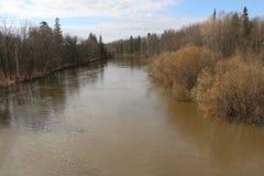 Alta marea di fonte rovesciando il fiume in primavera nella foresta dell'inondazione della foresta in primavera Immagine Stock