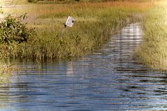 Alta marea di settembre su Hampton River immagine stock libera da diritti
