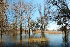 Alta marea ed inondazione stagionale nella primavera dopo la fusione della neve Immagine Stock
