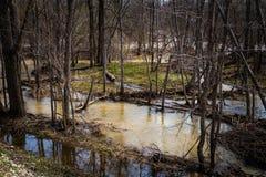 Alta marea nella foresta Fotografia Stock