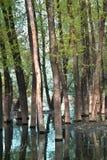 Alta marea nella foresta Fotografia Stock Libera da Diritti
