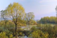 Alta marea in primavera Fotografia Stock