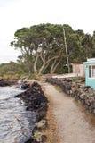 Alta marea sull'isola di Rangitoto Immagine Stock